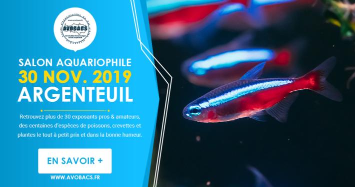 site de rencontre gratuit semblable à beaucoup de poissons