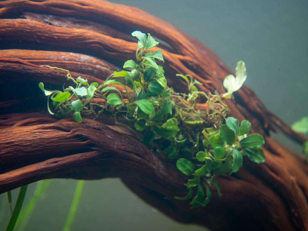 """""""Plantes"""